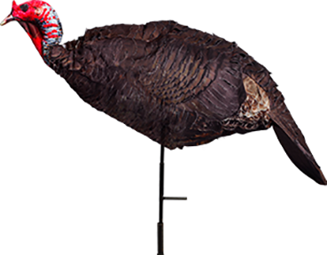 Jake Purr-fect Turkey Decoy
