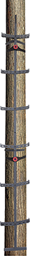 Big Dog Timber Sticks 24 ft.