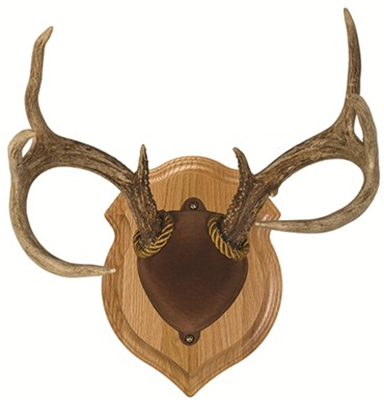 Deluxe Antler Display Kit Walnut