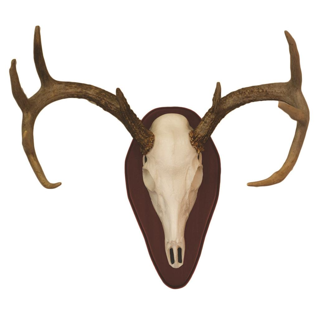Hunters Specialties Mount Kit Half Skull Deer Cherry
