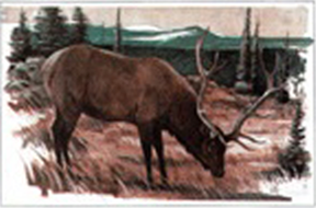 Maple Leaf Elk