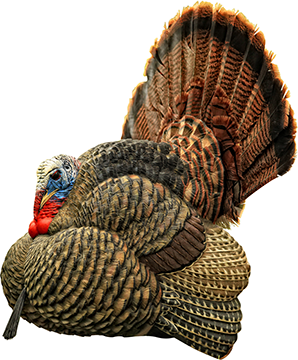 Avian X Turkey Decoy Strutter
