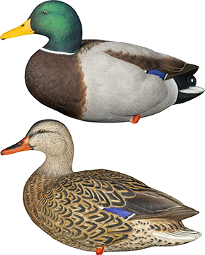 Avian X Full Body Decoy Mallard 6 pk.