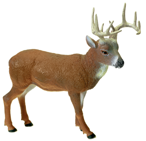 Hunter Dan Whitetail Deer