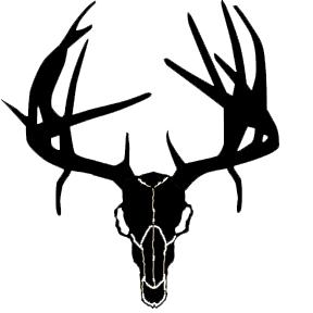 Buck Skull w/Drop Tines 6x6