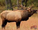 Duramesh Archery Target Elk 1 25 in.x 32 in.