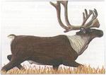 Maple Leaf NFAA Animal Faces Group 1 Caribou