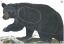 Maple Leaf NFAA Animal Faces Goup 1 Bear
