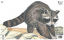 Maple Leaf NFAA Animal Faces Group 3 Raccoon