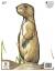 Maple Leaf NFAA Animal Faces Group 4 Prairie Dog