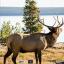 Infinity Target Face Elk 18x18