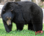 Duramesh Archery Target Black Bear 25 in.x 32 in.