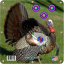 Arrow Mat XL Turkey Target 34x34