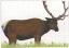 """NFAA Elk Target 28x40"""" ( Group 1)"""